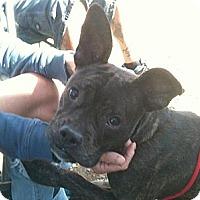 Adopt A Pet :: Mogwai - Lapeer, MI