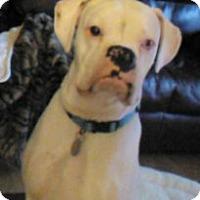 Adopt A Pet :: Brody Blue - Dayton, OH