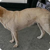 Adopt A Pet :: Jessie - Largo, FL