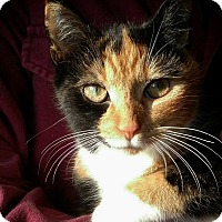 Adopt A Pet :: Miss Money Penny - N. Billerica, MA