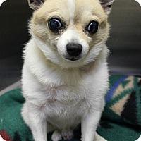 Adopt A Pet :: Tiny BLIND *urgent* - Los Angeles, CA