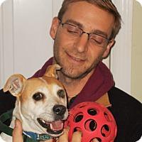 Adopt A Pet :: Tater - Plain City, OH