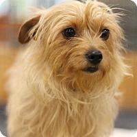 Adopt A Pet :: Patty - Sacramento, CA