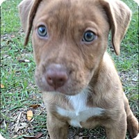 Adopt A Pet :: Molly - Gainesville, FL