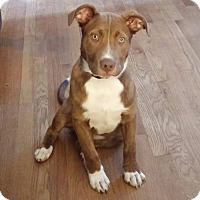 Adopt A Pet :: Chewy - Owensboro, KY