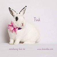 Dwarf Hotot Mix for adoption in Jurupa Valley, California - Tink
