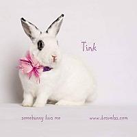 Dwarf Hotot Mix for adoption in Jurupa Valley, California - Tink