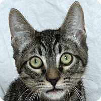 Adopt A Pet :: Nicholas V - Sacramento, CA