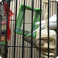 Adopt A Pet :: Mojo - Punta Gorda, FL