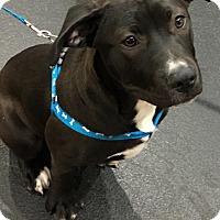 Adopt A Pet :: Crystal - Lodi, CA
