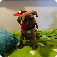 Adopt A Pet :: Tony Tiger - Vacaville, CA