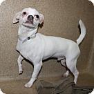Adopt A Pet :: 24496 - Yetti