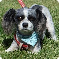 Adopt A Pet :: Hobbs - Palo Alto, CA