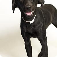 Adopt A Pet :: Freya - Baton Rouge, LA