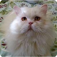 Adopt A Pet :: Jojo - Beverly Hills, CA