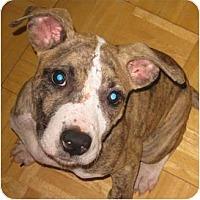 Adopt A Pet :: Meg - Killen, AL