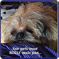 Adopt A Pet :: POLLY-PEANUT -ADOPTION PENDING - Seymour, MO