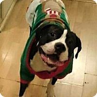 Adopt A Pet :: Maggie - Encino, CA