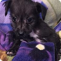Adopt A Pet :: Griffin - Surrey, BC
