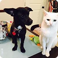 Adopt A Pet :: Houston Rosie - West Warwick, RI