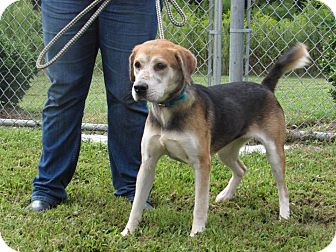 Hound (Unknown Type) Mix Dog for adoption in Windsor, Virginia - Maxi