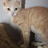 Adopt A Pet :: Tia - Louisville, KY