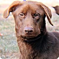 Adopt A Pet :: Diva - Williston Park, NY