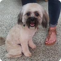 Adopt A Pet :: Margie - Thousand Oaks, CA