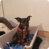 Adopt A Pet :: Lucy - Warsaw, IN
