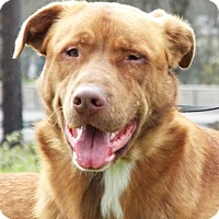 Adopt A Pet :: Scooby - Grants Pass, OR