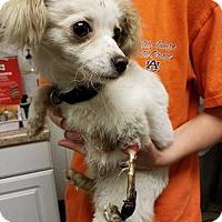 Adopt A Pet :: Cissy - Columbus, GA