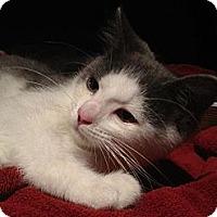Adopt A Pet :: Declan - New Egypt, NJ