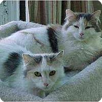 Adopt A Pet :: Ali & Zoey (beauties!) - Portland, OR