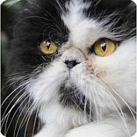 Adopt A Pet :: Apaloosa - Columbus, OH