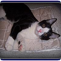 Adopt A Pet :: JoJo - South Plainfield, NJ