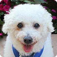 Adopt A Pet :: Beau - La Costa, CA