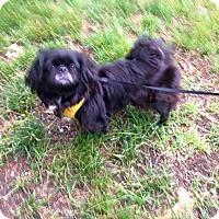 Adopt A Pet :: Annie - Portland, ME