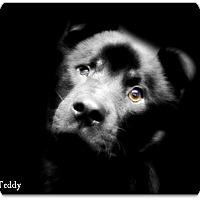 Adopt A Pet :: Teddy - Pascagoula, MS