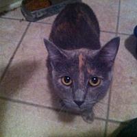 Adopt A Pet :: Nala - Baton Rouge, LA