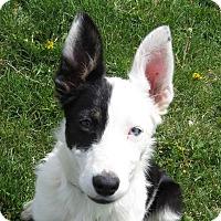 Adopt A Pet :: LIBBY **video!** - Nampa, ID
