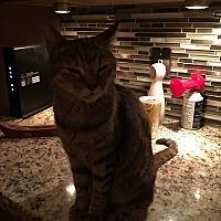 Adopt A Pet :: Susie - Lauderhill, FL