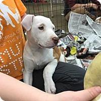 Adopt A Pet :: Sadie - Fresno, CA