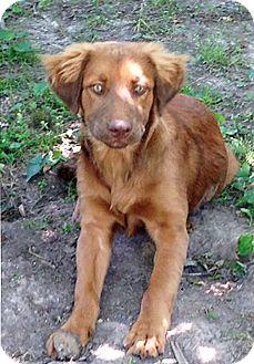 Golden Retriever Mix Dog for adoption in BIRMINGHAM, Alabama - Cinabear