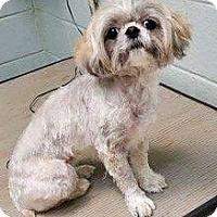 Adopt A Pet :: GINNY AND MATTHEW - PARSIPPANY, NJ