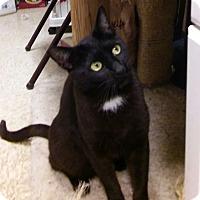 Adopt A Pet :: Maggie - Yorba Linda, CA