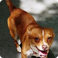 Adopt A Pet :: Pippin - Kalamazoo, MI