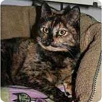 Adopt A Pet :: Sheena - Marietta, GA