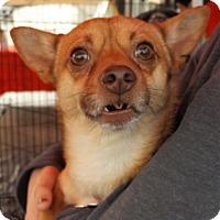Adopt A Pet :: Bosey - Oakley, CA
