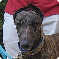 Adopt A Pet :: Louie - Oak Ridge, NC