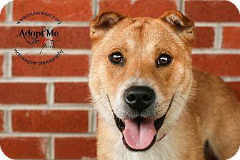 Labrador Retriever/Collie Mix Dog for adoption in Cincinnati, Ohio - Leroy- WAIVED FEE
